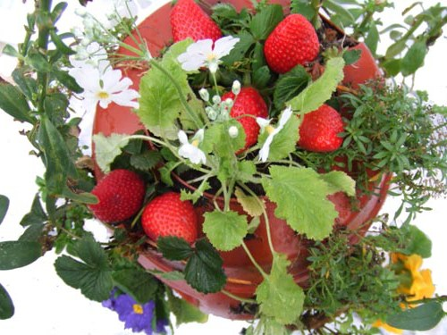 how to build a strawberry planter How to Build a Strawberry Planter