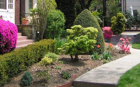 Garden How to Add Colors to Your Garden by Planting Different Shrubs