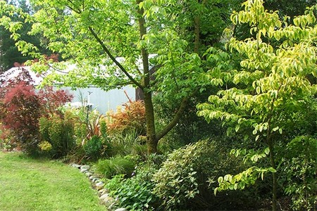 TREES AND SHRUBS How to Prepare and Plan for Trees and Shrubs