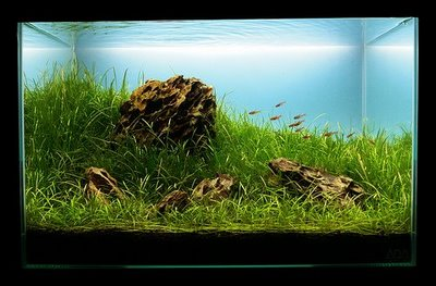 aquarium lighting How to Arrange Lighting for Your Aquarium