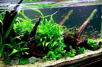 aquarium How to Add Water to Your New Aquarium