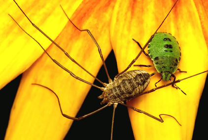 garden insects How to Attract Friendly Insects to Your Garden
