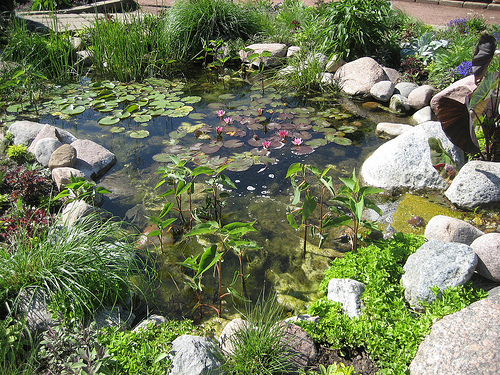 garden pond How to Build a Wildlife Garden Pond
