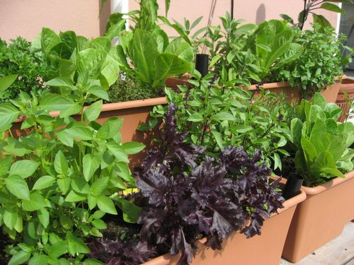 kitchen garden plants kitchen design photos