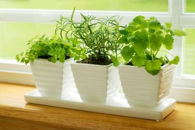 How to Grow Your Own Herbs How to Grow Your Own Herbs